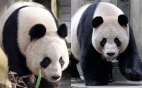 Pandas_2074523b