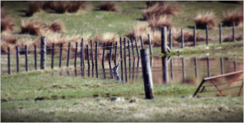 Heron in far field