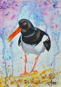 COLIN STATTER WILDLIFE ARTIST NEW PAINTING OF OYSTERCATCHER
