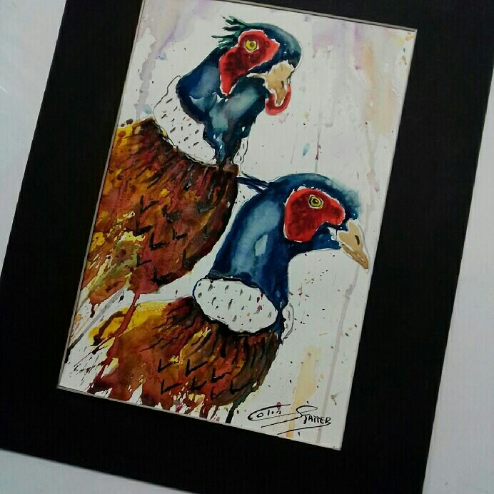 All my paintings up for sale at Ebay under my brand name COLIN STATTER WILDLIFE ARTIST PAINTINGS