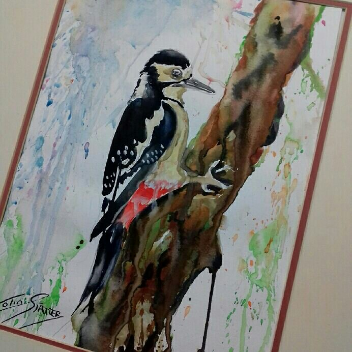 Now on sale at Ebay just type in colin statter wildlife paintings and all my newly painted watercolours will come up for sale.